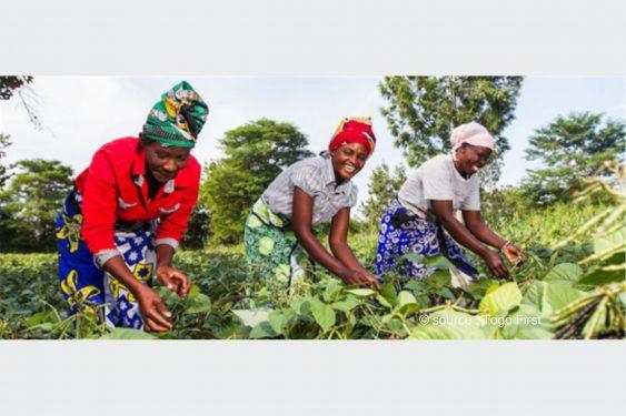 *Togo First* : Dans les plateaux, une intercommunale pour appuyer l'agropastoral