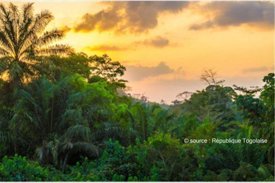 *République Togolaise* : Le Togo veut planter un milliard d'arbres au cours des 10 prochaines années