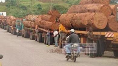 Photo de Cameroun : Les pays de l'Afrique Centrale mettent fin à l'exportation du bois en grume