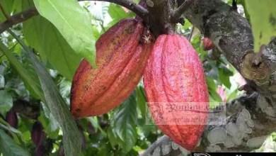 Photo of Production de cacao : Barry Callebaut veut renforcer ses investissements au Cameroun