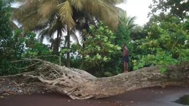 Photo of La France offre 3 milliards Fcf au Cameroun pour l'environnement