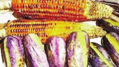 Photo of Cameroun – Débrouillardise: Les bonnes affaires du maïs grillé