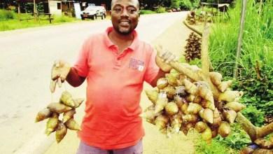 Photo of Cameroun: Le commerce d'escargots, une nouvelle mine d'or à Yaoundé