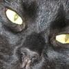 Båt-katten