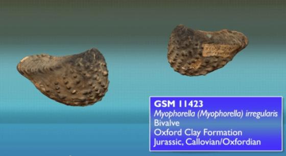 fósiles 3d