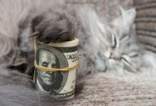Photo of Five Surefire Ways to Save On Pet Care