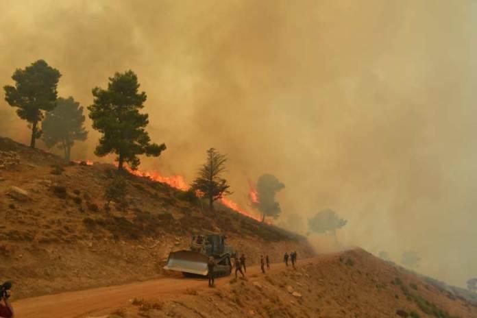 Union européenne: 80.000 euros d'aides au profit des sinistrés des feux de forêts en Algérie