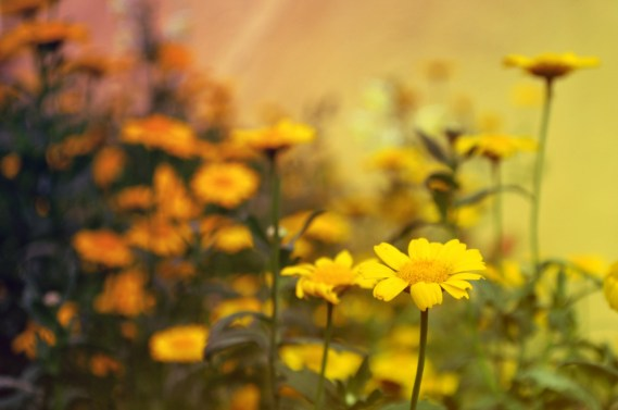 libros_de_verano_flowers