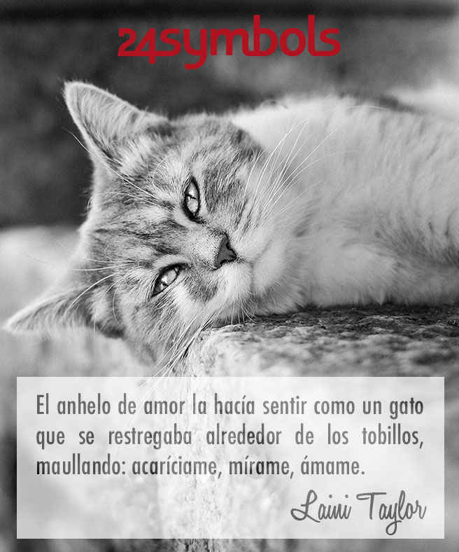 citas sobre gatos
