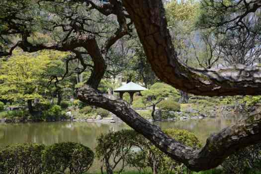 Camminare tra mente e corpo - Giappone_Tokyo, Hibiya-koen