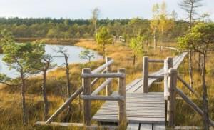 tirelu-purvs-marshe-bogs-latvia-travel