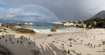 Penguines (2)
