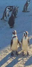 Penguines (6)