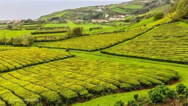 Tea Porto Formoso Aussicht