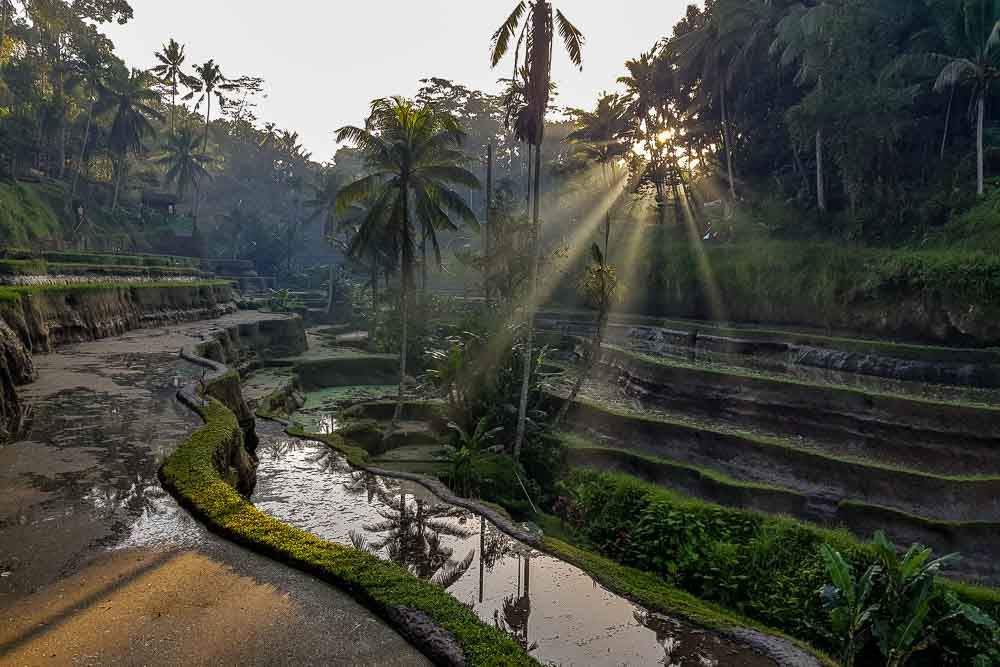 Cosa vedere a Ubud, il cuore di Bali