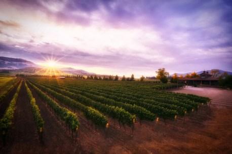 2Hawk Vineyard and Winery Tasting Room and Vineyard at Sunrise