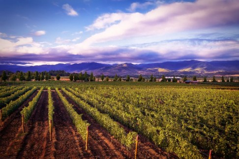 2Hawk Vineyard and Winery Vineyard, Mountains, and Clouds