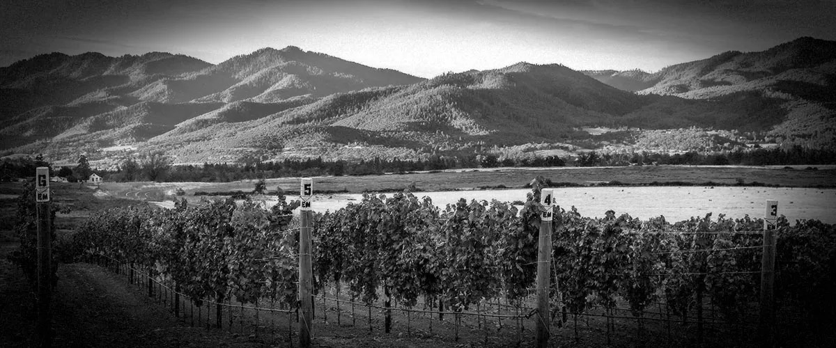 2Hawk Vineyard and Winery Vineyards and Mountain Scenery (Grayscale)
