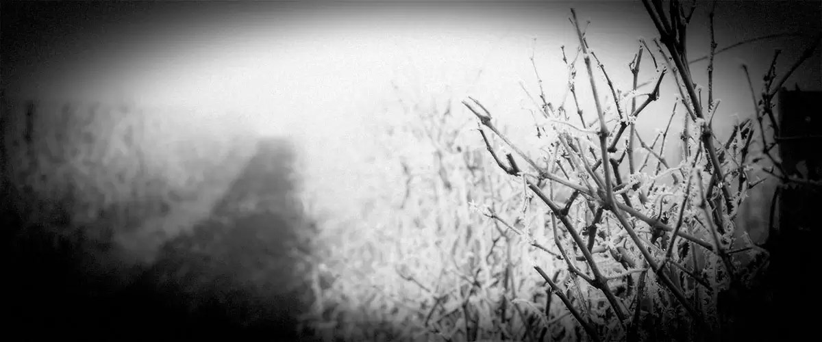 Winter Vineyard Scene (Grayscale)