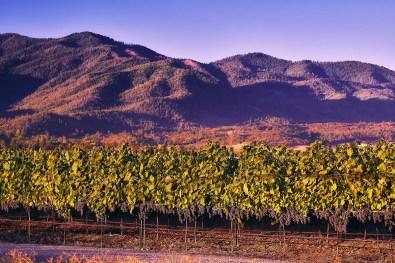 2Hawk Vineyard and Winery Vineyard with Purple Mountains