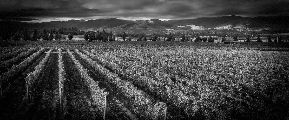 2Hawk Vineyard and Winery Vineyard, Mountains, and Clouds (Grayscale)