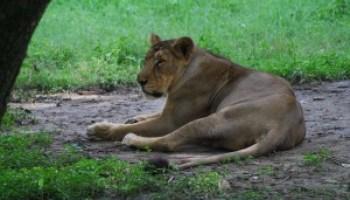 marathi animals