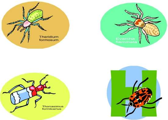 sanskrit names of insects