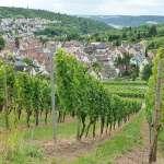 Weinwanderung um Stuttgart