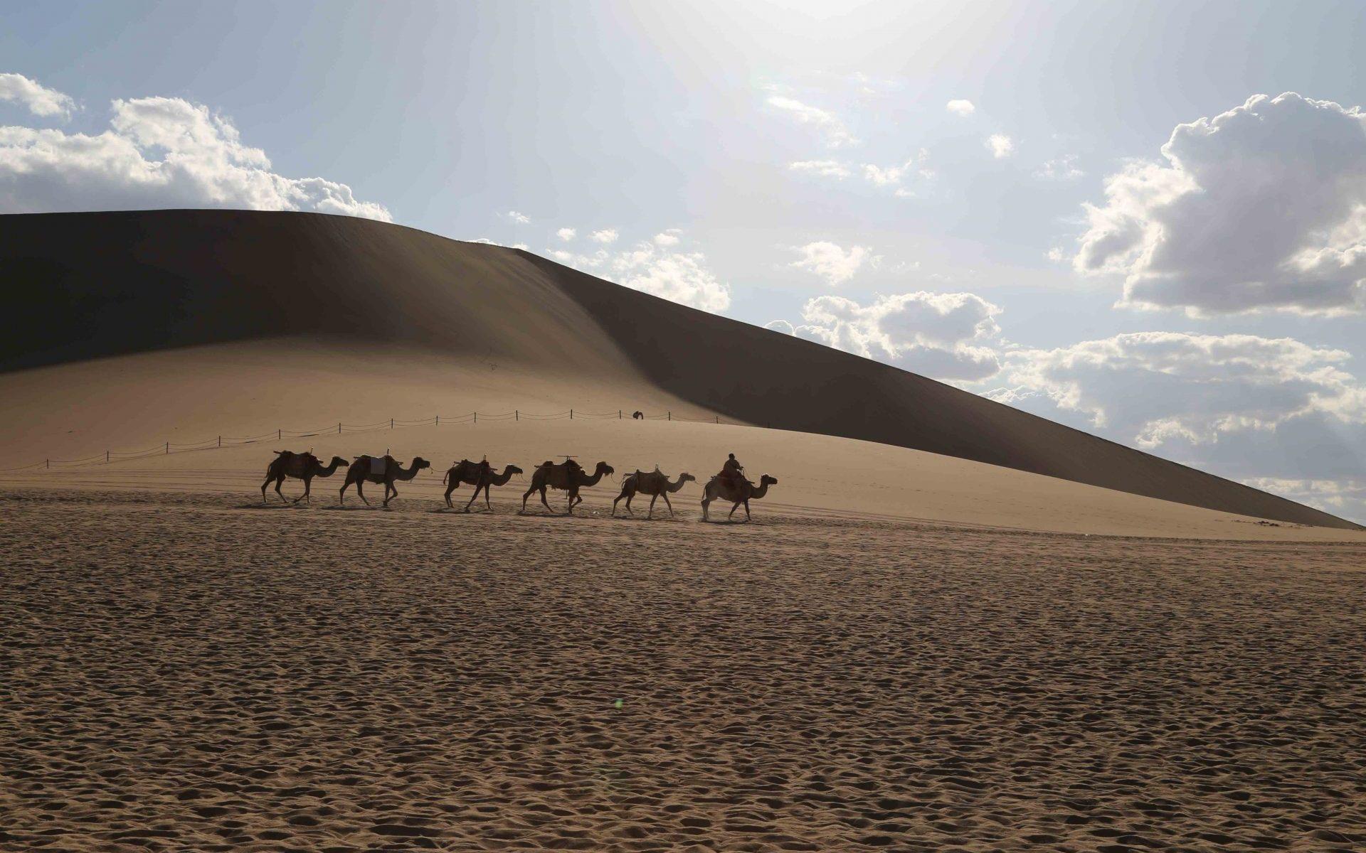 Dunhuang MingSha Sand Dunes Camel Train