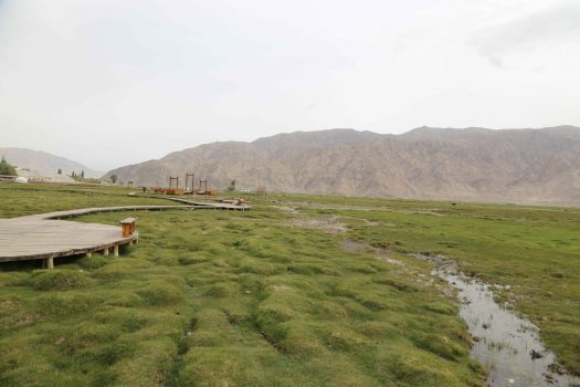 boardwalk over golden grassland tashkurgan