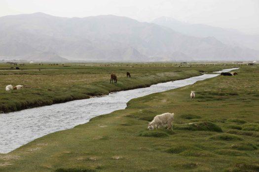 river across golden grassland tashkurgan
