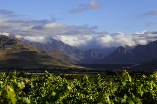 The valley of Stellenbosch