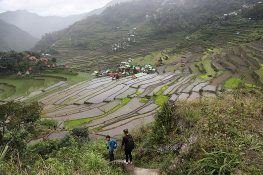 Hiking around the rice terraces of Batad