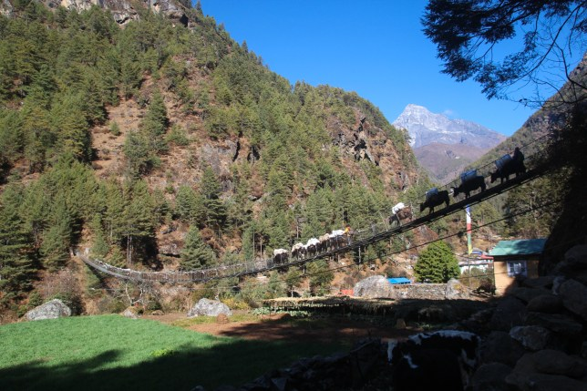 Donkeys walking across a bridge near Phakding