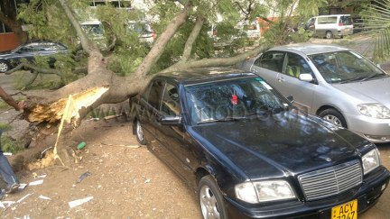 Tree falls on car in Harare