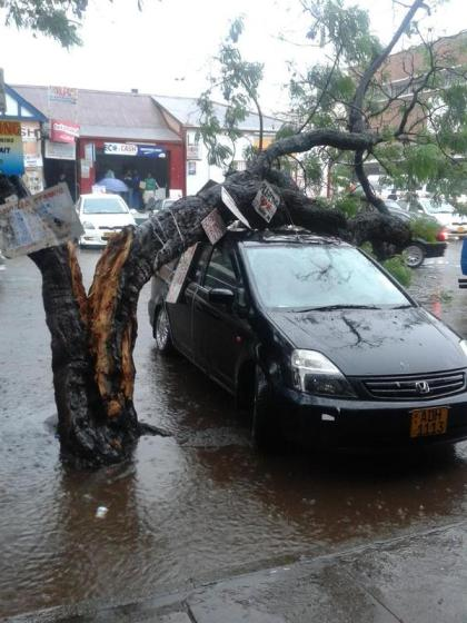 Tree falls on car in Harare PIC: @shokomike