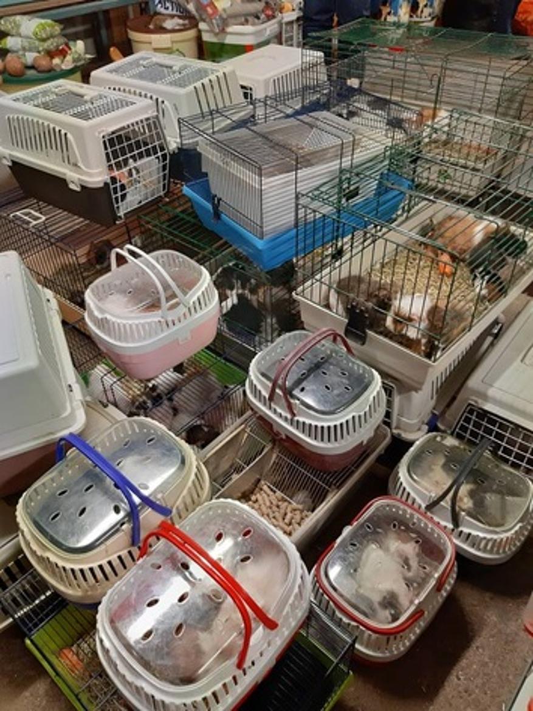 Rongeurs dans leurs cages pour leur transport vers les Pays-Bas. © Kuufke