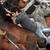 Les chevaux sont traumatisés par ces scènes violentes. © Wikipédia