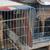 2 chiens étaient en cages. © DR