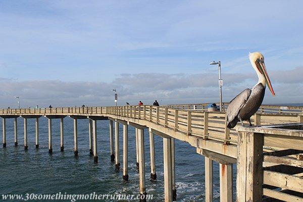Pelican on OB pier