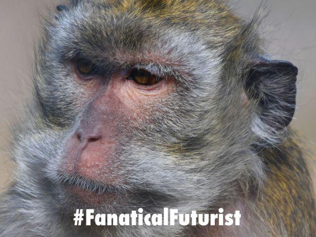Futurist_macac_monkey