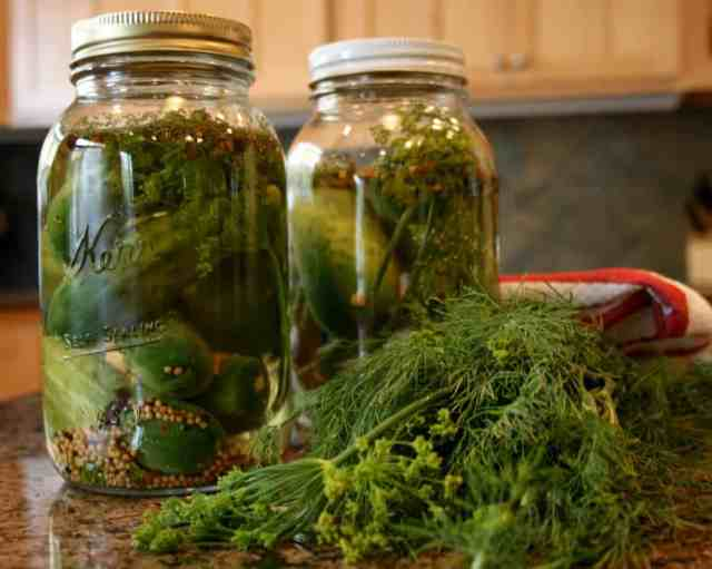 Refrigerator Spiced Dill Pickles are incredibly easy to make, require little canning equipment and keep for months. | 31Daily.com