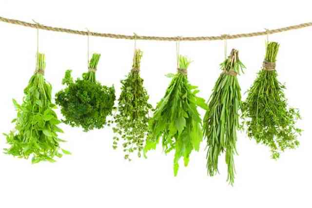 When the summer garden produces its abundance, we want to hold on to it as long as possible. Drying herbs is one way we can bring the taste of summer into the winter kitchen. Learn the difference between Less Tender Herbs and Tender-Leaf Herbs and how to preserve them at 31Daily.com.