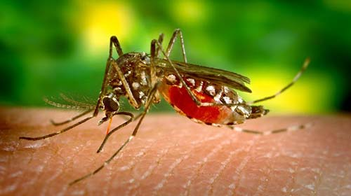 8 Natural Mosquito Repellent Plants Aid Zika Concerns