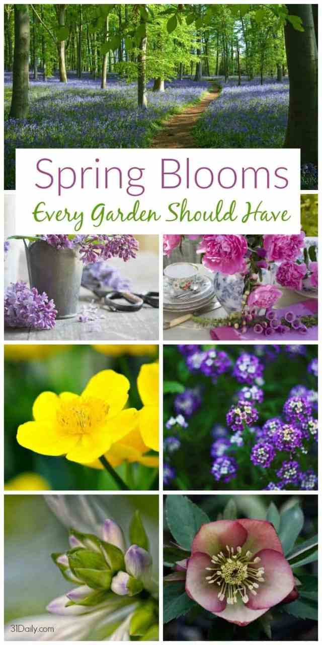Spring Blooming Flowers Every Garden Should Have | 31Daily.com