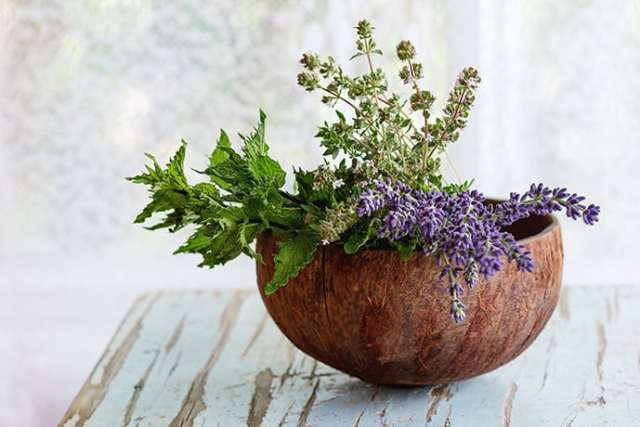 Easy Herbs to Grow that Every Cook Needs   31Daily.com