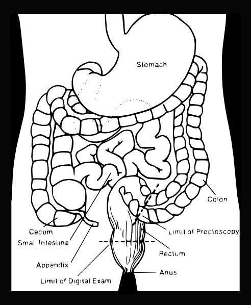 Anatomy Coloring Pages 2   Coloring Pages To Print