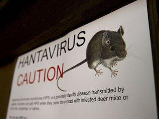El virus l'escampen animals com els ratolins o les rates.