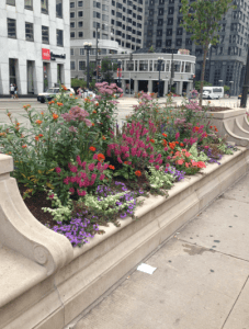 flowers Chicago