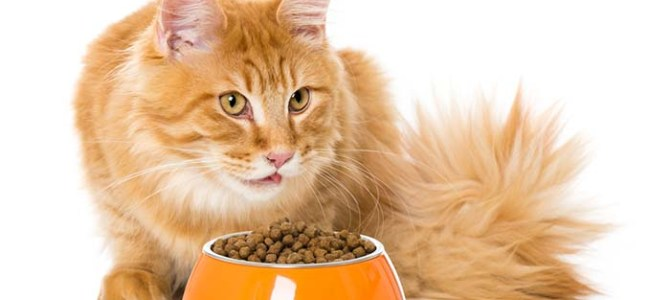 Cat Food for Sensitive Stomach